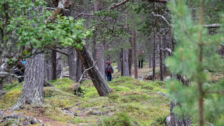 Norwegen Trekking Wald