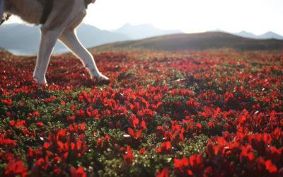 Erfahrungsbericht – Norwegen – Husky Andøya
